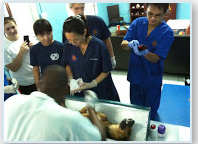 Trinity SOM students assist with spaying and neutering clinics